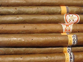 6-4:葉巻を食べるシバンムシ、タバコビートルとは?